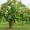 Обрезка плодовых деревьев #1179735