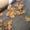 Продам перепелок разного возраста порода английский Техас, яица, перепелиное  мясо #1459585