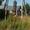 Спилим,  обрежем деревья. Верхолаз (арборист) Евгений,  спецтехника. #1337163