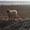 Осеменение. Молочные породы. Овцы. #1678920