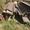 Балка, Швеллер новые и б/у - Изображение #5, Объявление #1050831