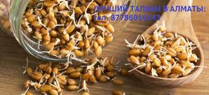 Продаем полезный диетический продукт - Талкан, тел.87786016143 - Изображение #2, Объявление #1689808