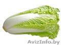 Салат из Испании - Изображение #3, Объявление #1328768