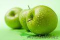 Саженцы (привитые, карликовых, полукарликовых и классических) плодовоягодных. ) - Изображение #7, Объявление #471566