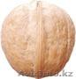 Саженцы (привитые, карликовых, полукарликовых и классических) плодовоягодных. ) - Изображение #5, Объявление #471566