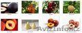 Саженцы (привитые, карликовых, полукарликовых и классических) плодовоягодных. ), Объявление #471566
