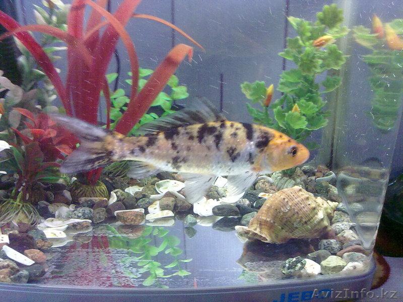 золотая рыбка рыбалка алматы