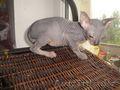 марку купить недорнедо котенка сфинска высококачественное термобелье