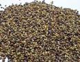 Семена люцерны, клевера№ - Изображение #1, Объявление #792321