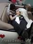 Фото видеосъемка.Свадьбы в Алматы.Aренда  лимузина кабриолета.Тамада - Изображение #6, Объявление #12303
