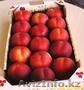 Свежие  фрукты и овощи из Испании