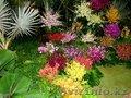 Разнообразные садовые растения!