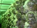 Ищем инвестора для строительства грибного комплекса