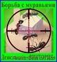Борьба с муравьями в доме,  квартире,  на участке. Алматы и область.