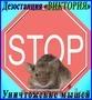 Борьба с мышами в Алматы и области. Дезостанция «ВИКТОРИЯ»