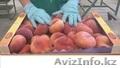 плоский персик(парагвайский)