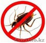 Борьба и уничтожение тараканов в Алматы и Алматинской области, Объявление #1131165