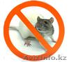 Борьба и уничтожение крыс в Алматы и Алматинской области, Объявление #1131153