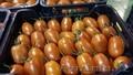продаем помидоры