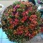 101 спрей роза 70 см