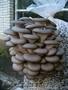 Организую для вас грибное производство, рентабельность более 70%, Объявление #1189533