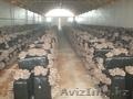 Организуем грибное производство  - Изображение #2, Объявление #1199266