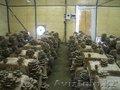 Организуем грибное производство  - Изображение #3, Объявление #1199266