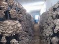 Организуем грибное производство  - Изображение #4, Объявление #1199266