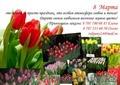 Доставка тюльпанов на 8 Марта