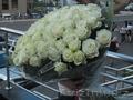 Букет 101 белая роза 70 см
