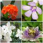 Растения для вашего дома
