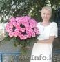 Букет из 51 розовой розы 70 см