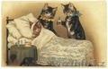 Ветеринарные услуги с выездом на дом, круглосуточно - Изображение #2, Объявление #1271781