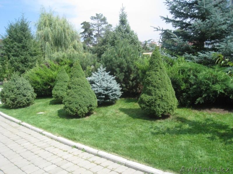 Озеленение. Ландшафтный дизайн. Алматы., Объявление #1348818