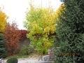 Озеленение. Ландшафтный дизайн. Алматы. - Изображение #2, Объявление #1348818
