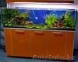 Изготовление и  готовые аквариумы алматы - Изображение #5, Объявление #1365122