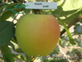 Саженцы яблони оптом - Изображение #2, Объявление #1357471