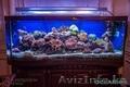 Изготовление и  готовые аквариумы алматы - Изображение #3, Объявление #1365122