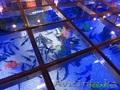 Изготовление и  готовые аквариумы алматы - Изображение #4, Объявление #1365122