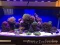 Изготовление и  готовые аквариумы алматы - Изображение #2, Объявление #1365122