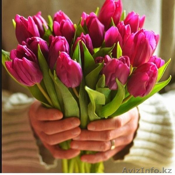 Купить тюльпаны в алматы оптом комнатные цветы купить в харькове