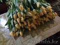 Продаем тюльпаны на 8 марта