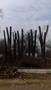Чистка ЗАРОСШИХ участков в Алматы и Алматинской области! - Изображение #3, Объявление #1398365