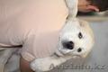 Щенки Алабая от чемпиона РК (СКК-FCI) - Изображение #4, Объявление #1428988