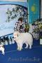 Большая горная пиренейская собака