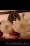 Кактус  эхинопсис - Изображение #2, Объявление #1511103