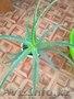 Цветы для дома и офиса, недорого. 1500тг срочно - Изображение #3, Объявление #1360434