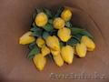 Тюльпаны к 8 марта оптом и розницу - Изображение #5, Объявление #1535623