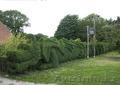 Озеленение участка, газоны, цветники, водоемы - Изображение #2, Объявление #1384509