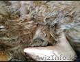 Продаем пушистые и красивые ковры из шерсти Альпака - Изображение #3, Объявление #1579783